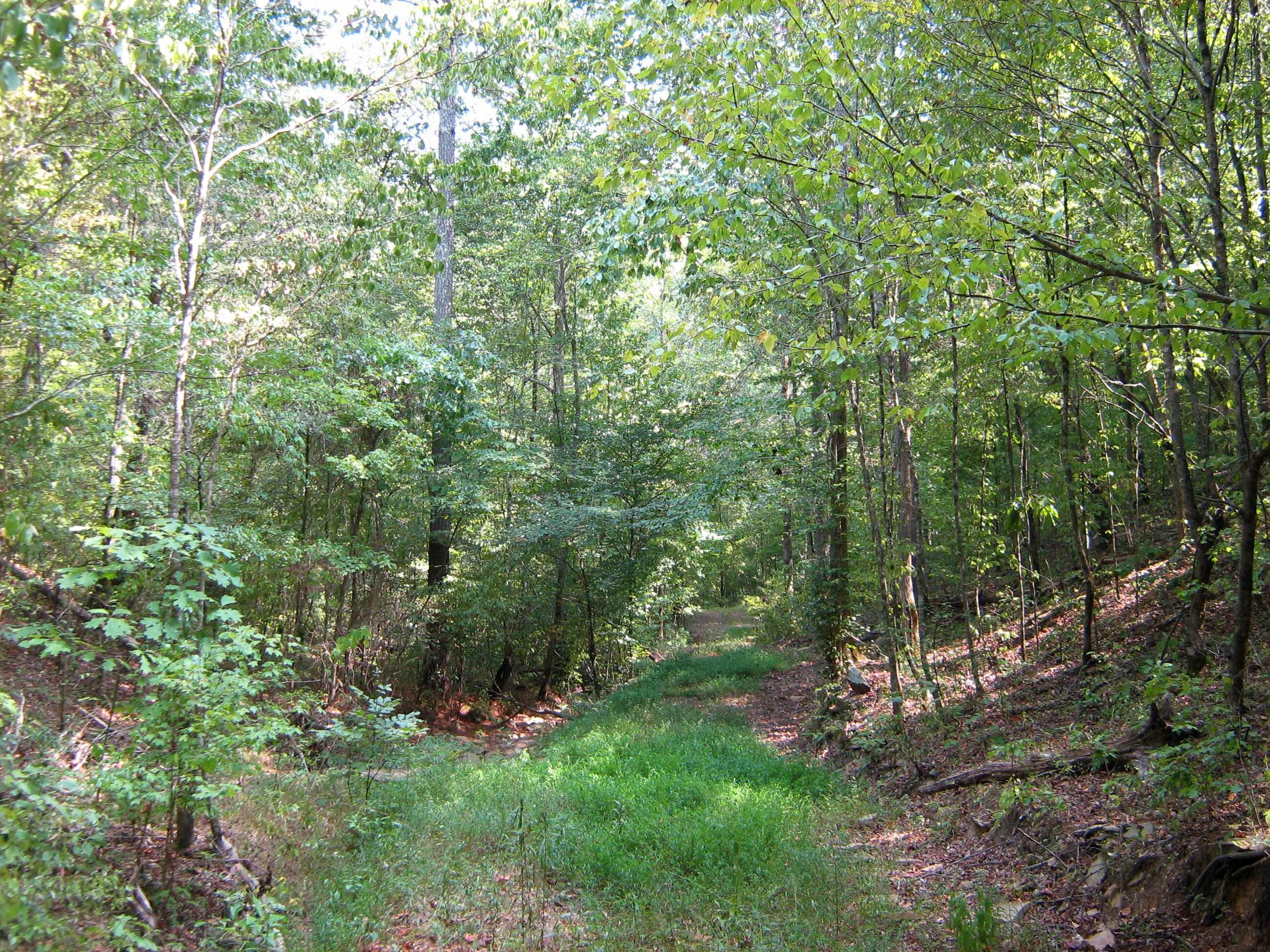 one of several woods roads