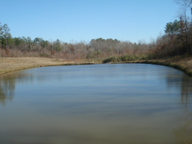 one of 3 small ponds on Tract 4