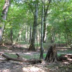 Bottomland Hardwood 2