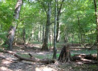 A private hunting, timber and recreation property