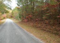 NEW PRICE – Hunting and timber property near Alexander City