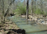 Great hunting & timber investment near Gadsden
