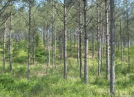 Timber investment near Birmingham