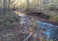 Cheap hunting land with a creek