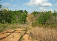 Investment-grade Timberland & Cheap Hunting Land
