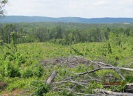 Clear Cut Timber But Great Piece Of Land