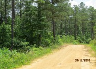 Valuable Timber & Great Hunting