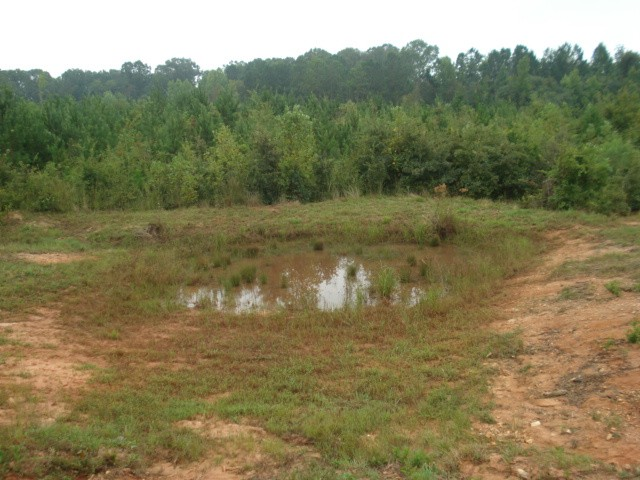 an old pond site
