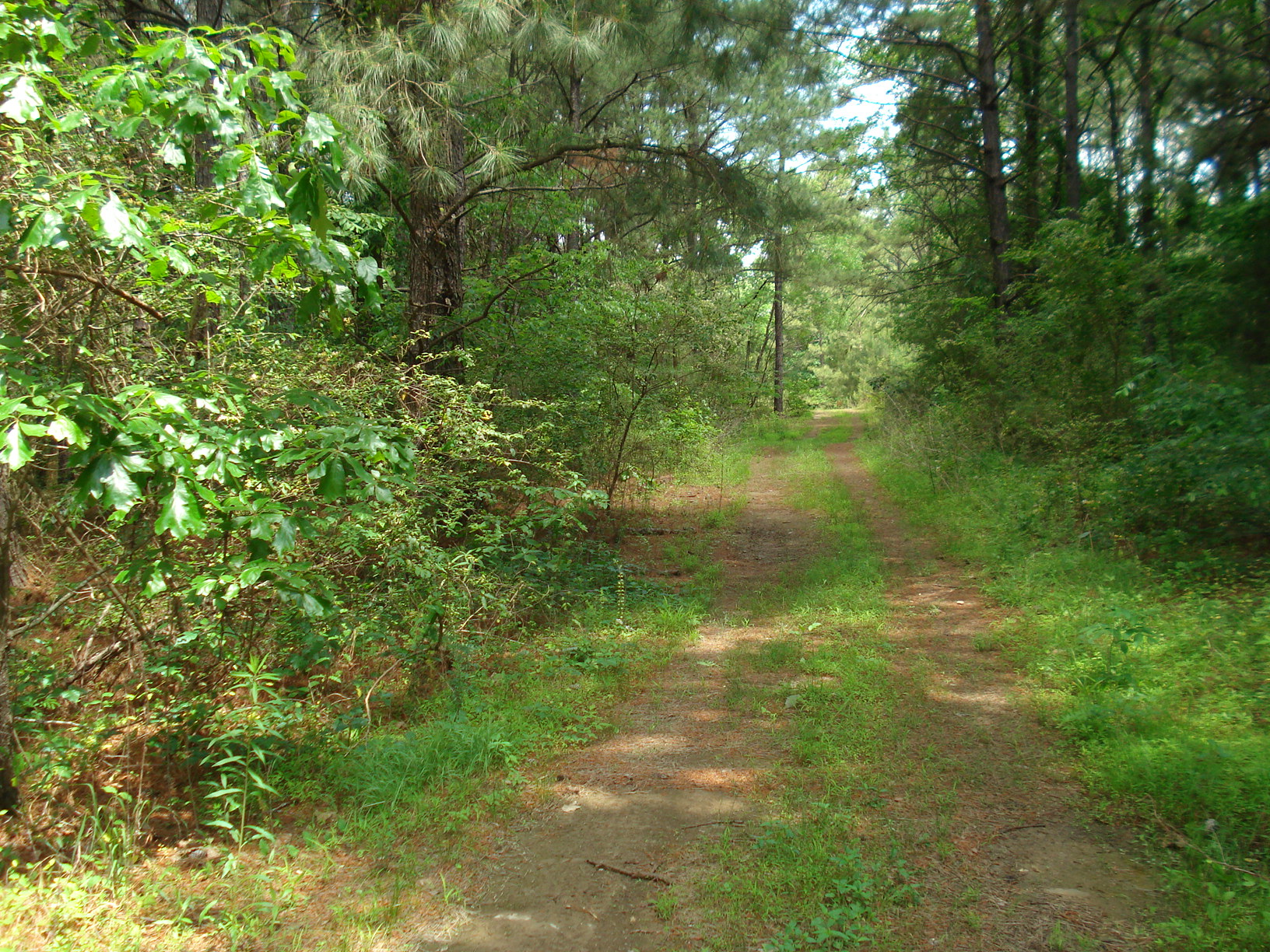 the main woods road through the property