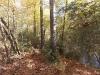 1hardwoods