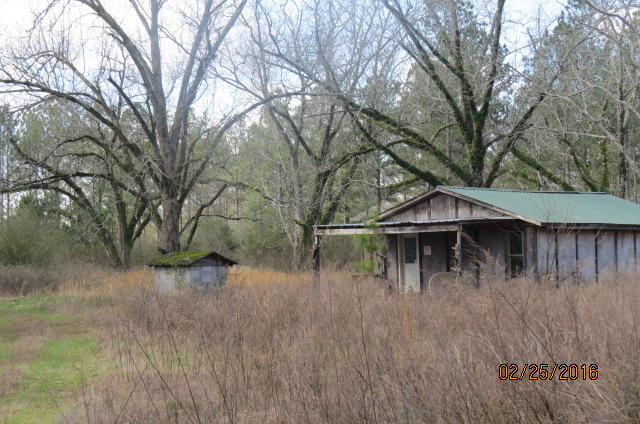 A hunting cabin in the pecan grove