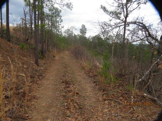 The woods road that separates the 76 acre tract (waterfront) from this tract