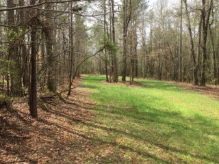 A wildlife food plot - the hunting is fantastic