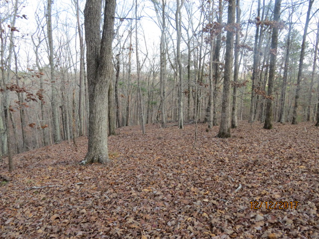 Notice the lack of under-story typical of mature hardwood forest