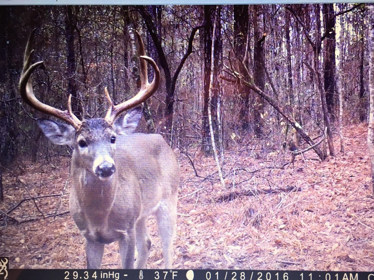 This is from a game camera on the property