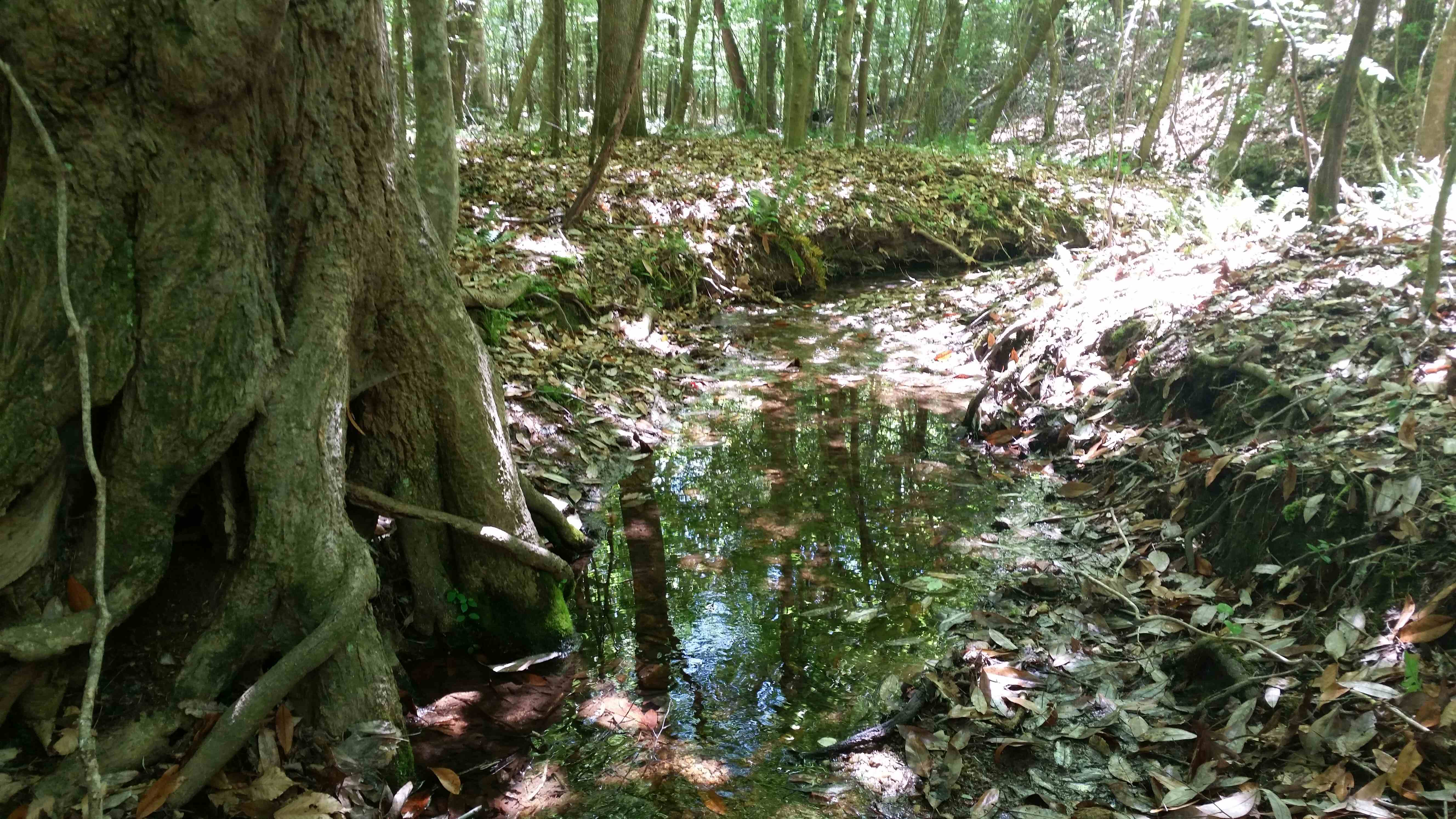 A view of one of the small creeks on the property.