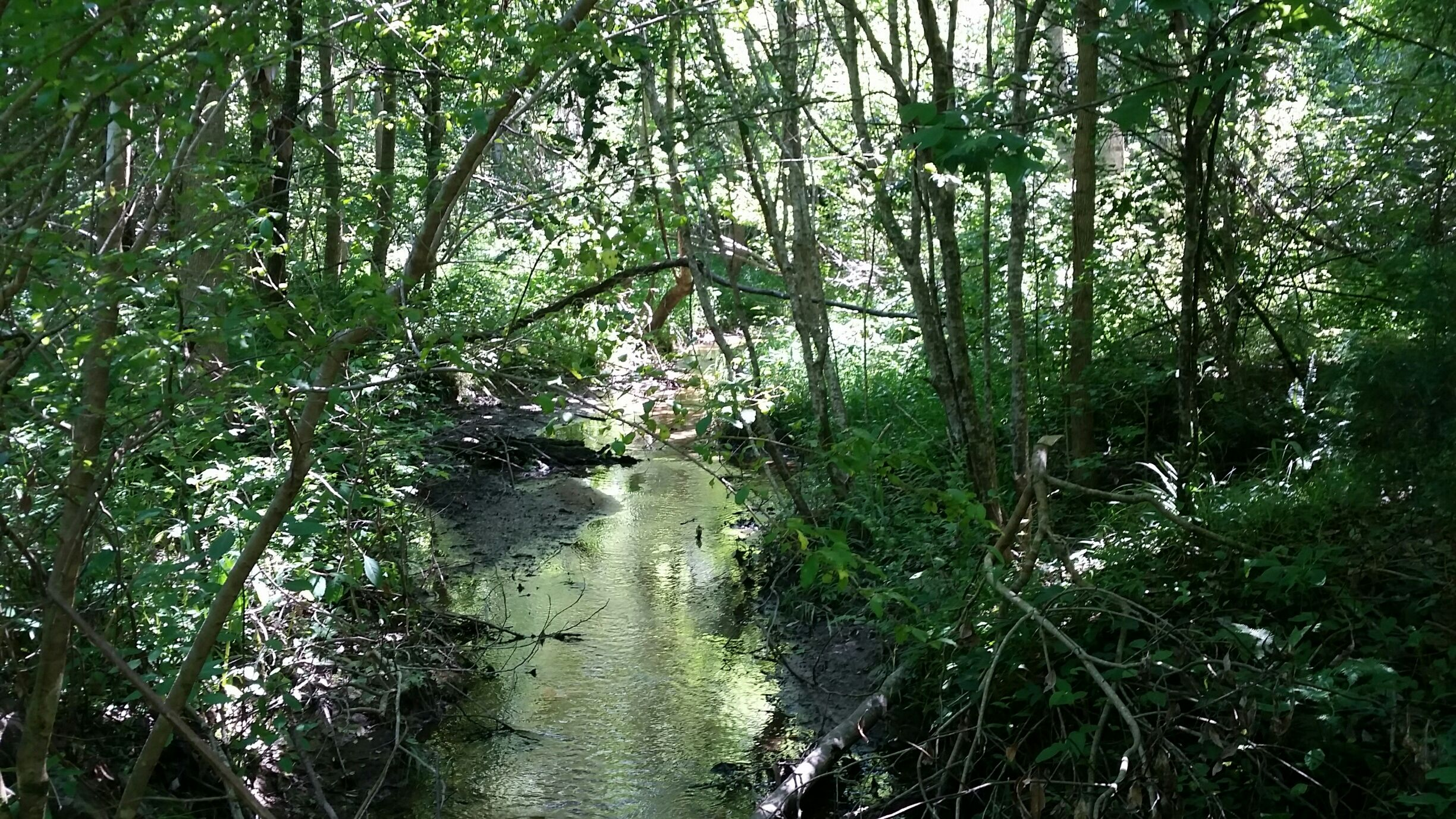 A view of the main creek that crosses the property.  There are other small creeks too