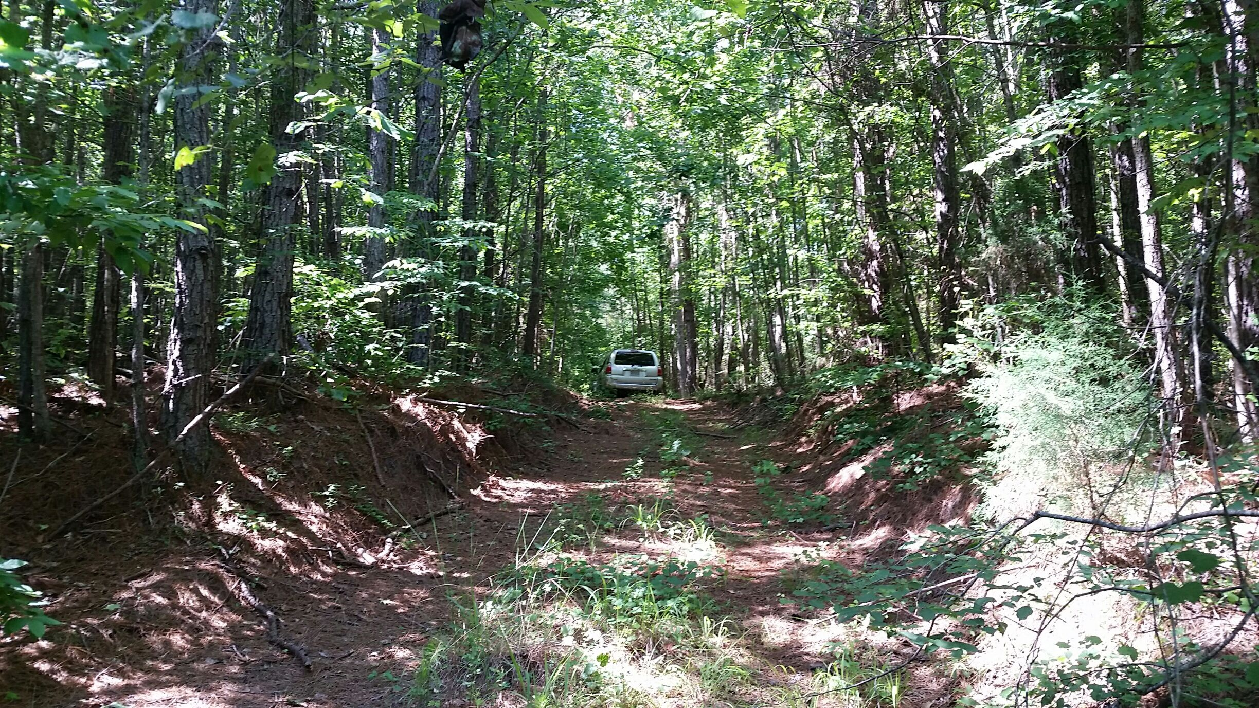 A view of the woods road that leads into the property
