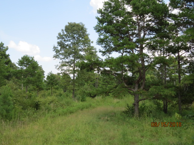 Some of the brushy areas are heavy to shortleaf pine
