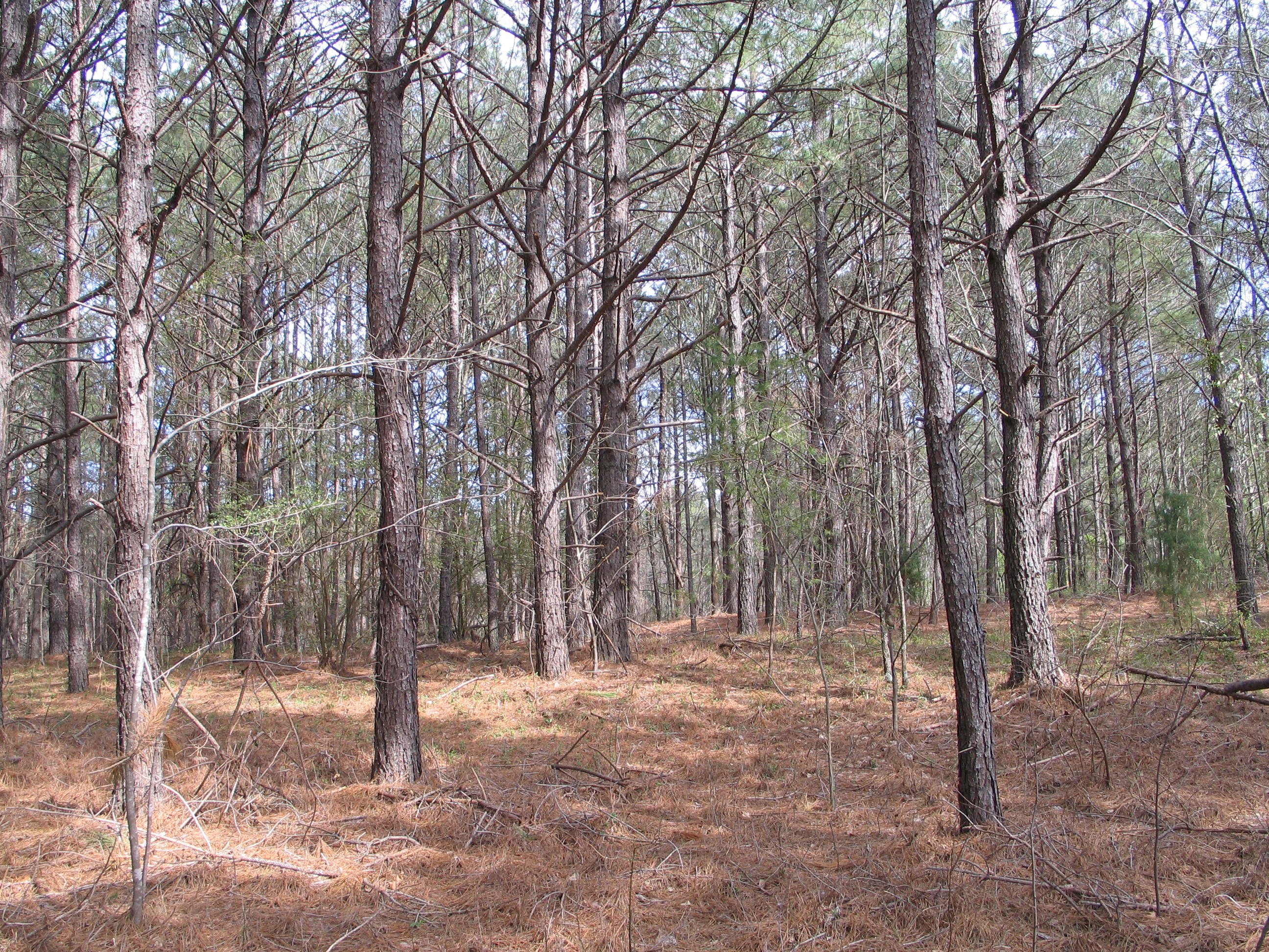 There are 18 acres of  planted pines with significant value