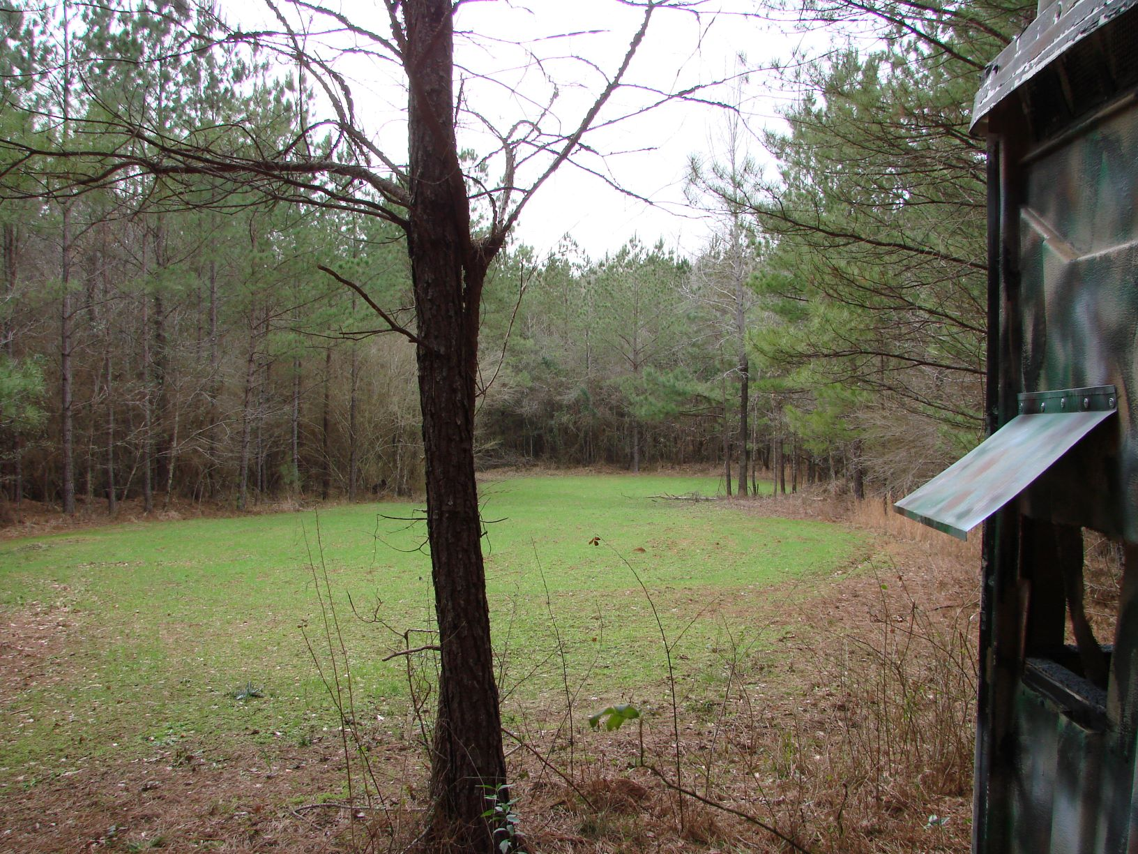 Another of the wildlife food plots on the property