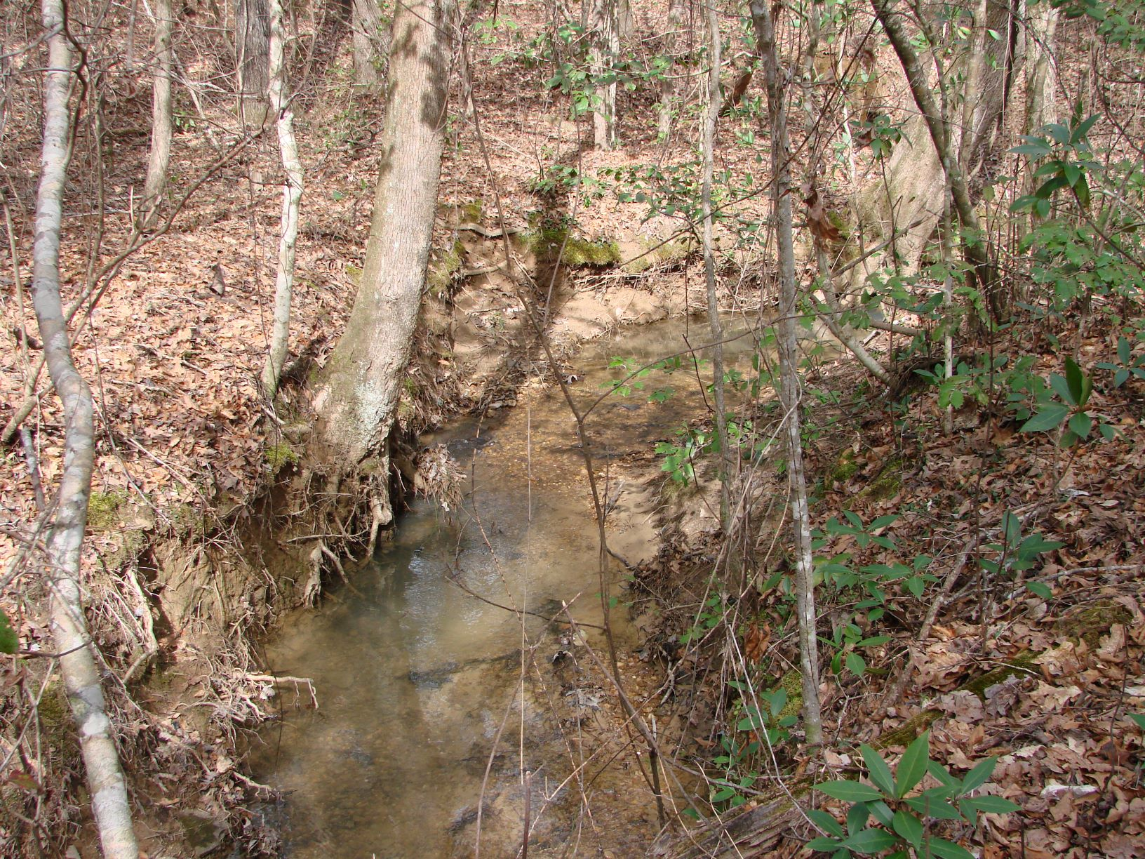 There are about a mile of small creeks like this on the property