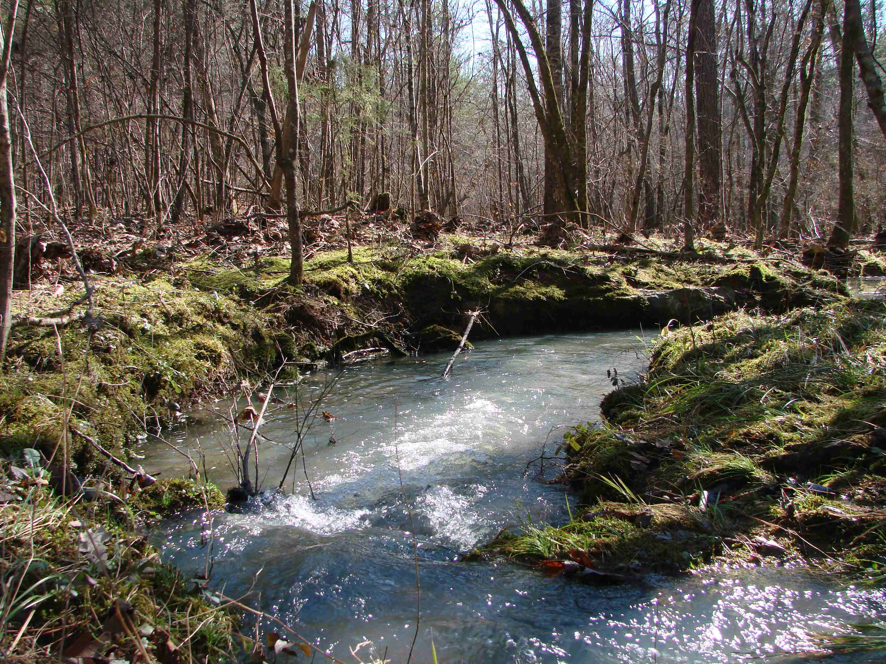 A view of a small creek that flows into Watson Creek