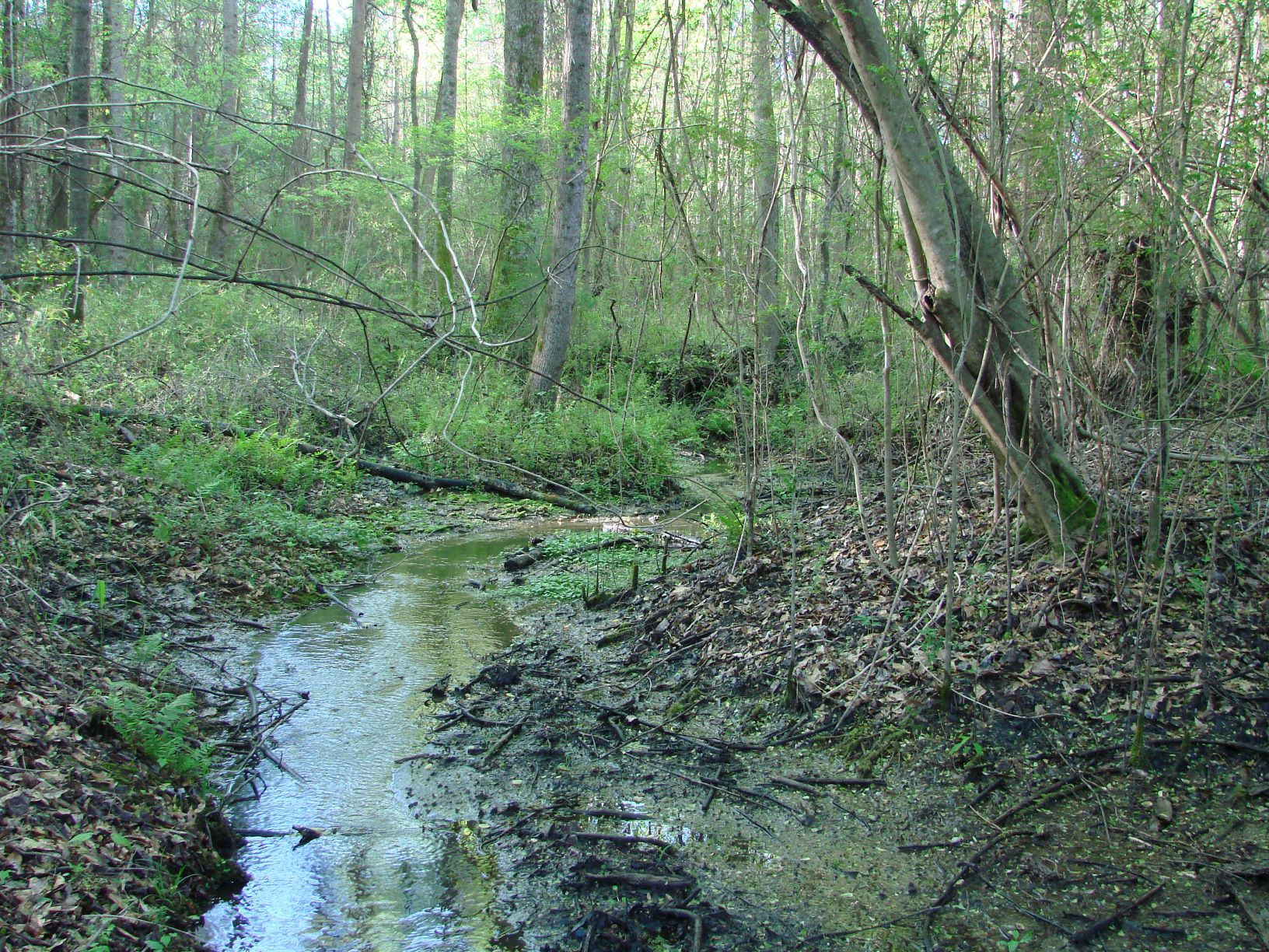 This spring-fed creek flows out of a stand of hardwood timber