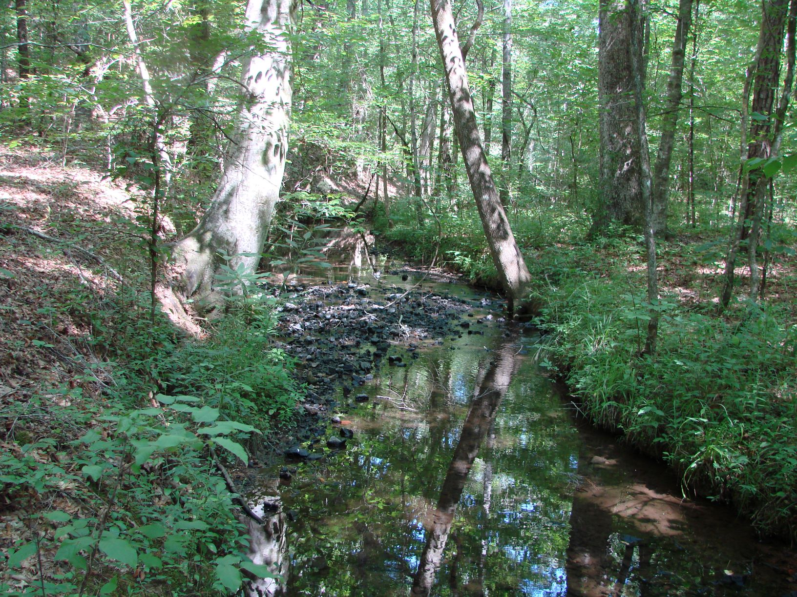 The main creek that crosses the property for about 1/4 mile
