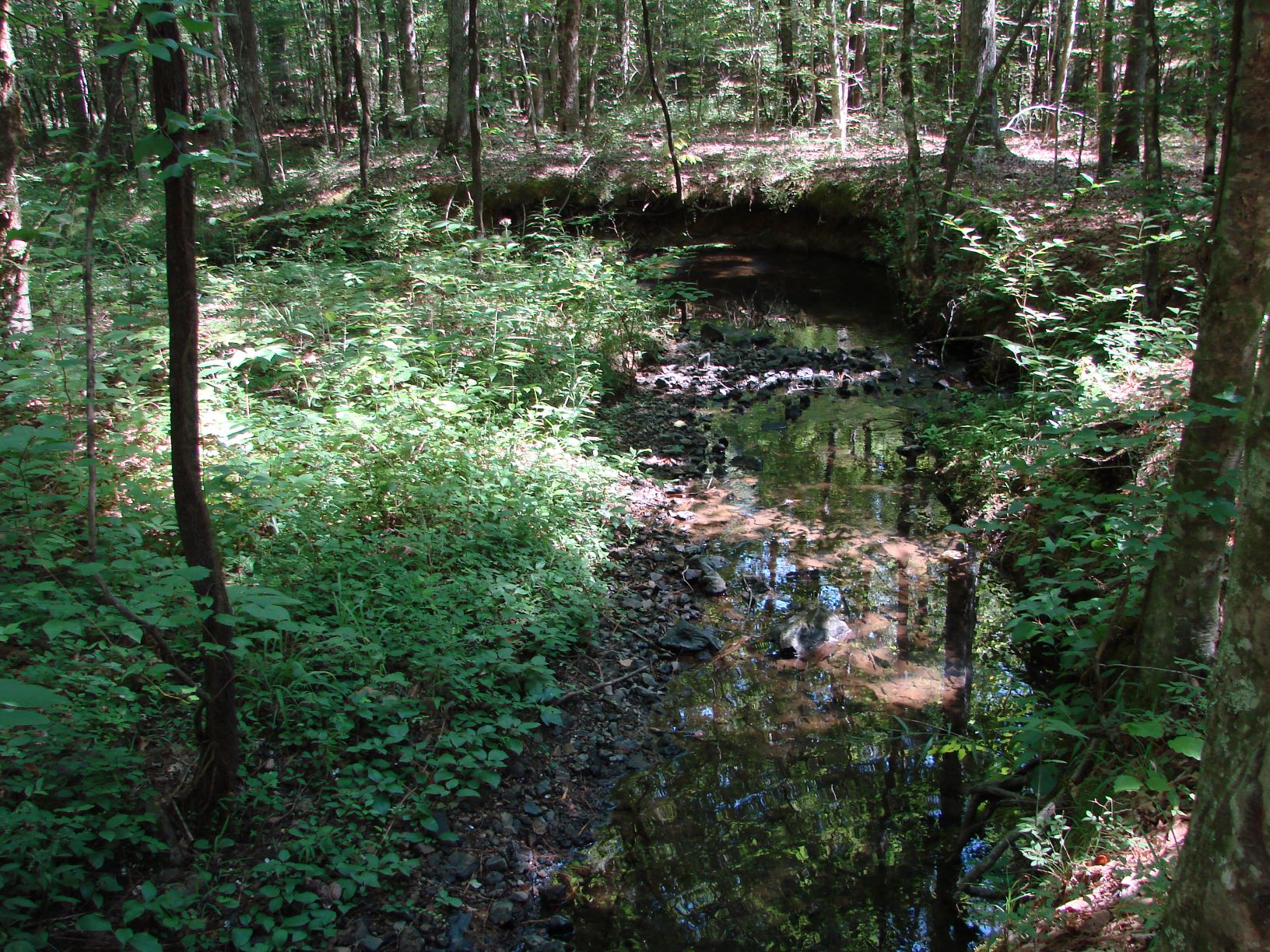 Another view of the creek that crosses the property