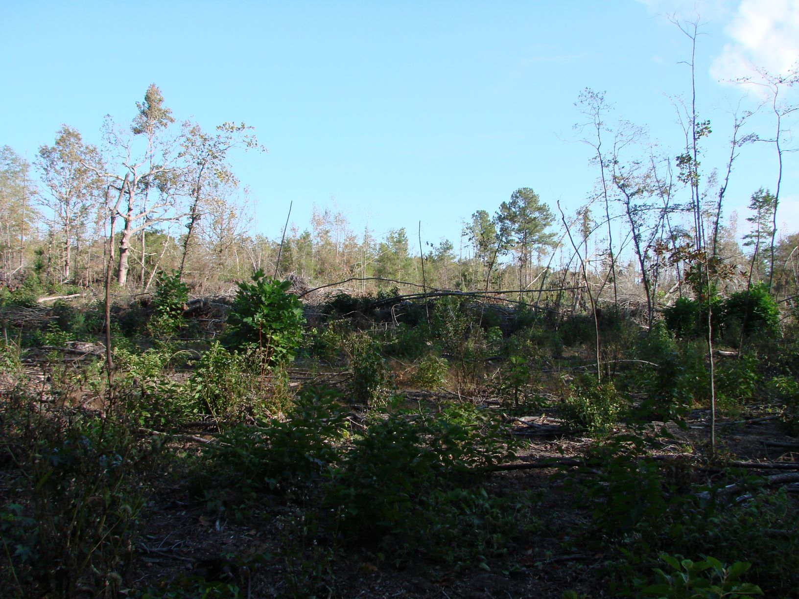 About 137 acres of recent clear-cut old fields would be easy to convert back to pasture