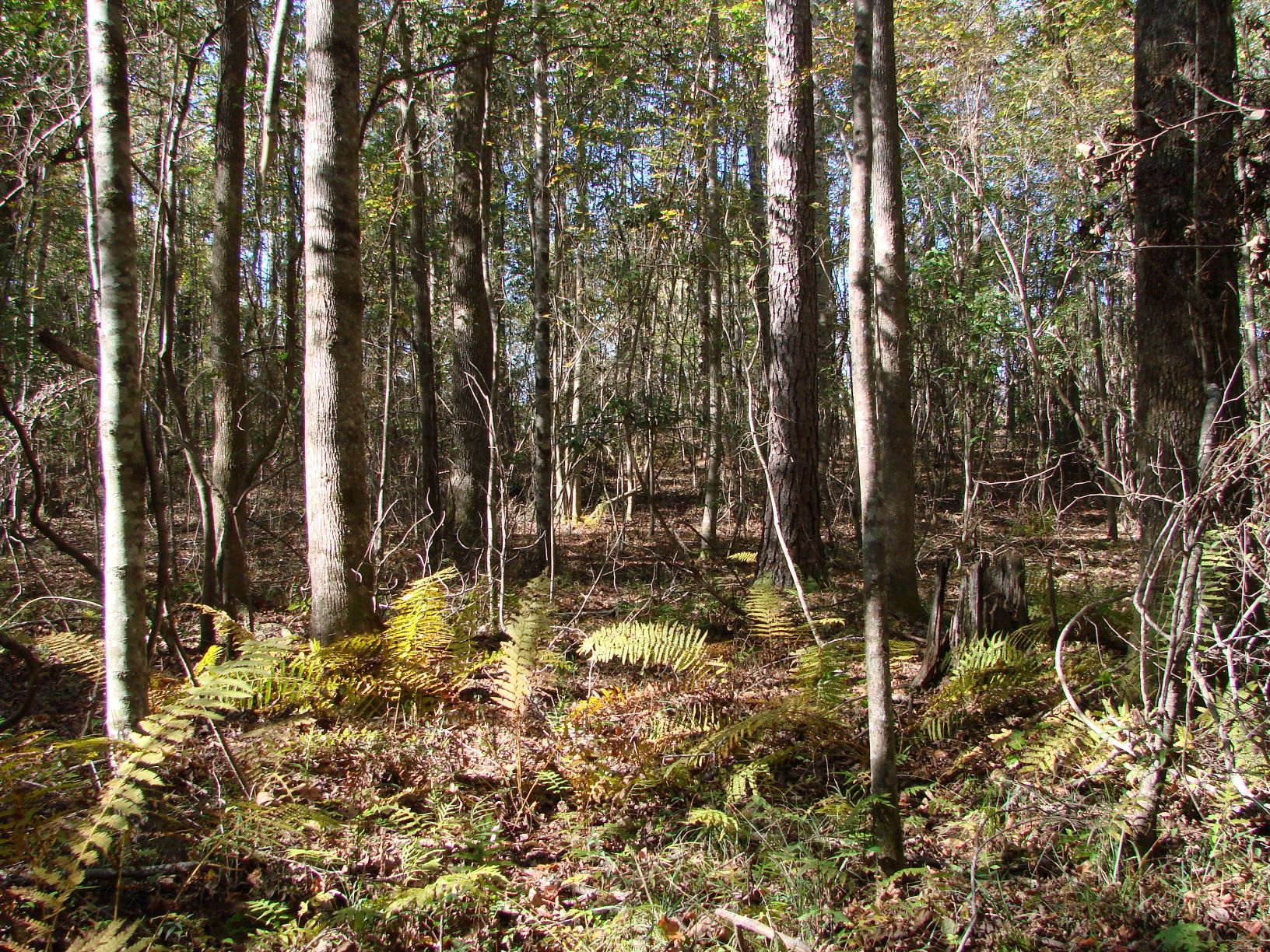 Some of the timber that is part of the 63 acres of mature timber