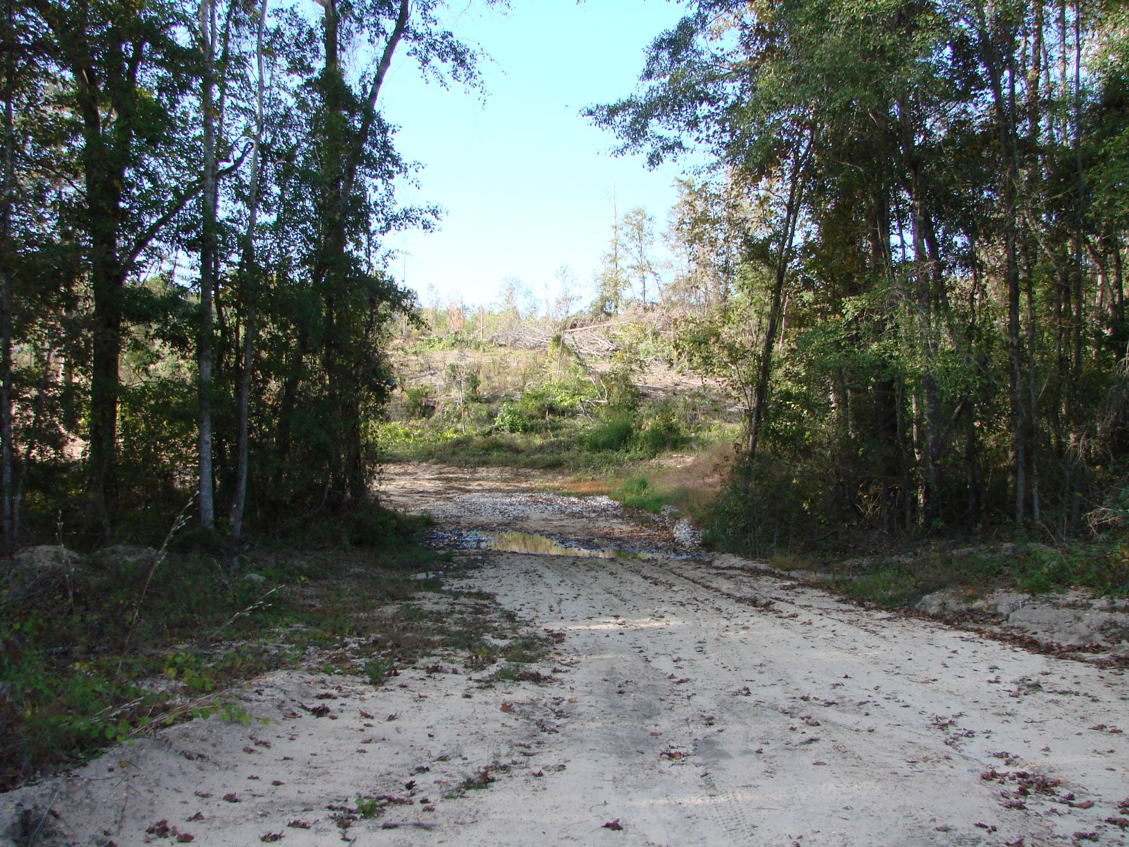 One of many woods roads on the property