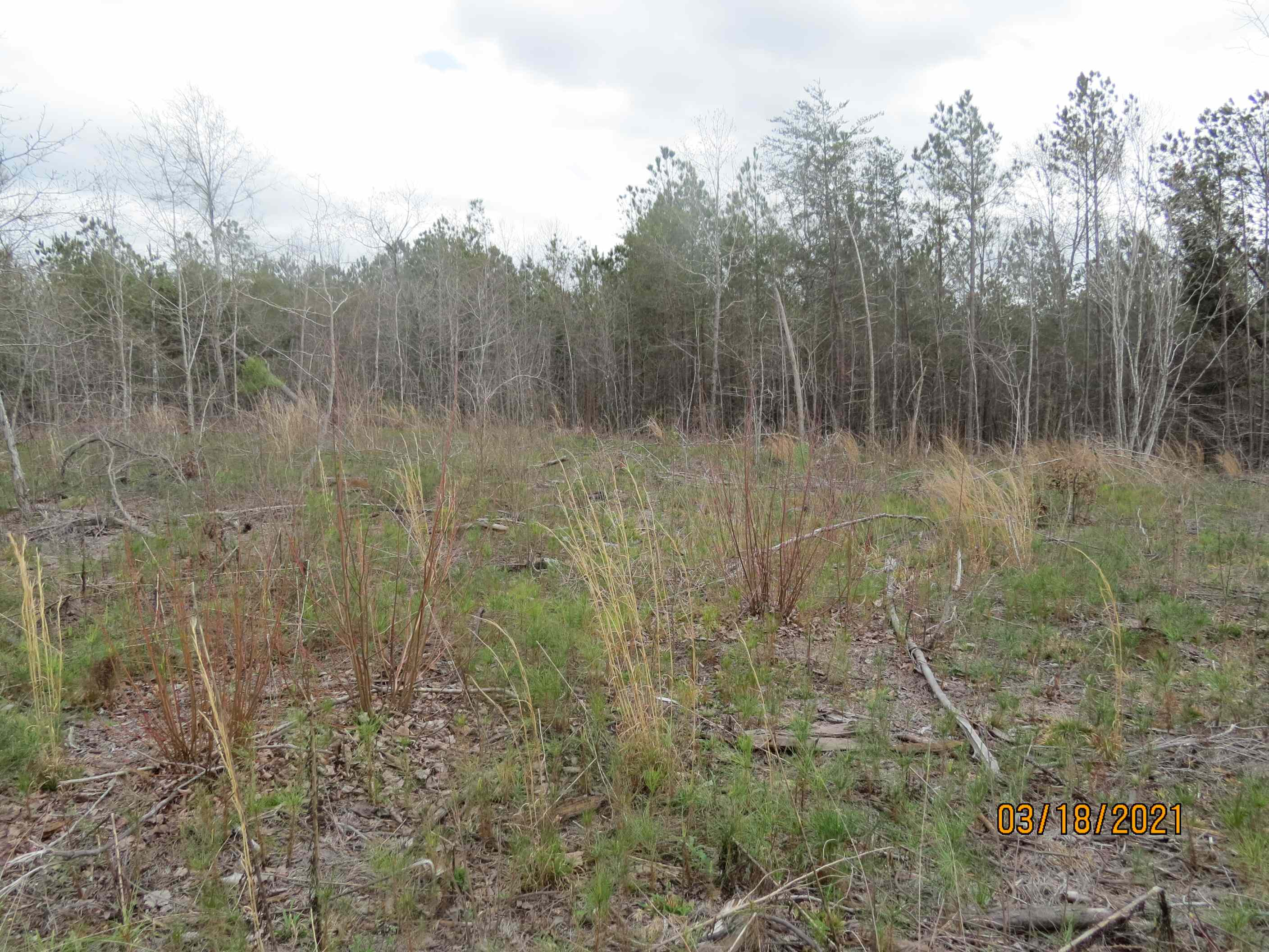 Another potential house site. Notice the large amount of volunteer pine seedlings