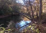 Investment-grade timberland on big creek