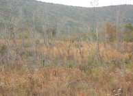Investment-grade timberland
