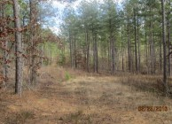 Timber Investment & Rural Home Site