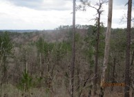 Great hunting and rural home sites