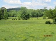 Beautiful Creek-side Cattle Farm