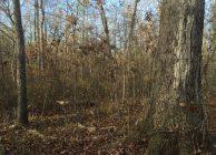 Scenic Natural Timberland