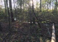 Private Montevallo Homesite With Acreage