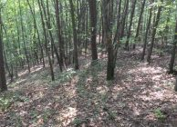 58 Acres Hunting & Timberland with Home Site Potential for Sale