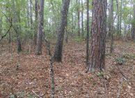 Pea Ridge Home Site and Hunting