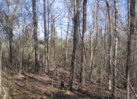 Hunting Property & Timber Investment