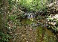 Hunting Land For Sale Near Sylacauga