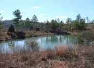 Cheap Hunting & Timber Investment Land