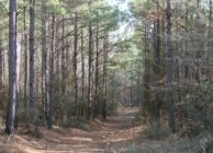 High-quality Timber Investment & Hunting