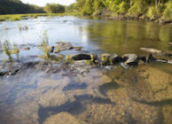 CAHABA RIVER JEWEL NEAR  NAT'L WILDLIFE REFUGE