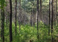TIMBERLAND FOR SALE NEAR CLANTON