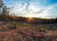 VALUABLE MULTI-USE LAND NEAR PINSON, PALMERDALE, CLAY